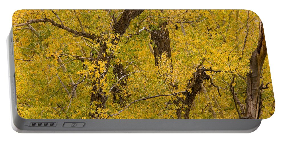 Autumn Portable Battery Charger featuring the photograph Cottonwood Fall Foliage Colors by James BO Insogna