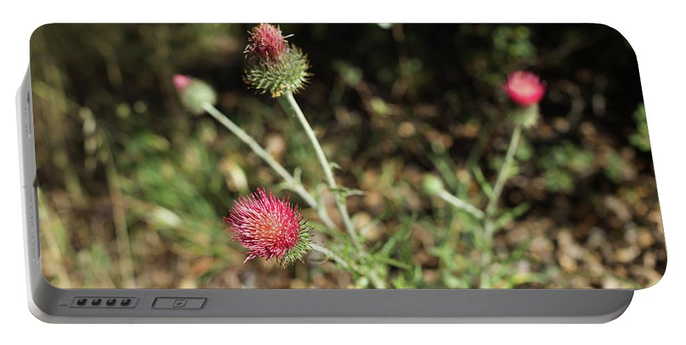 2013 Portable Battery Charger featuring the photograph Coulter's Thistle by Curtis Pope
