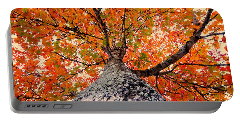 Fall Portable Battery Charger featuring the photograph Covered In Fall by David Lee Thompson