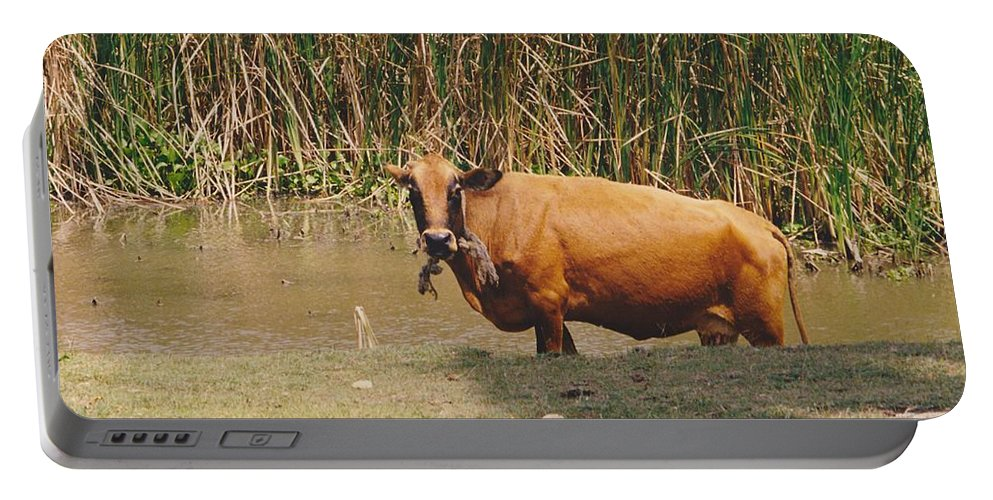 Animal Portable Battery Charger featuring the photograph Cow In The Field by Michelle Powell