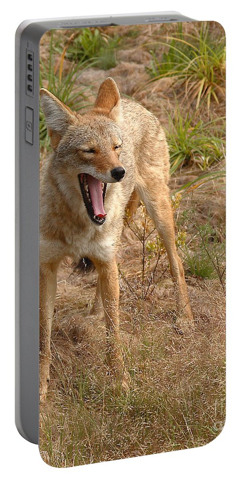 Coyote Portable Battery Charger featuring the photograph Coyote Caught In A Yawn by Max Allen