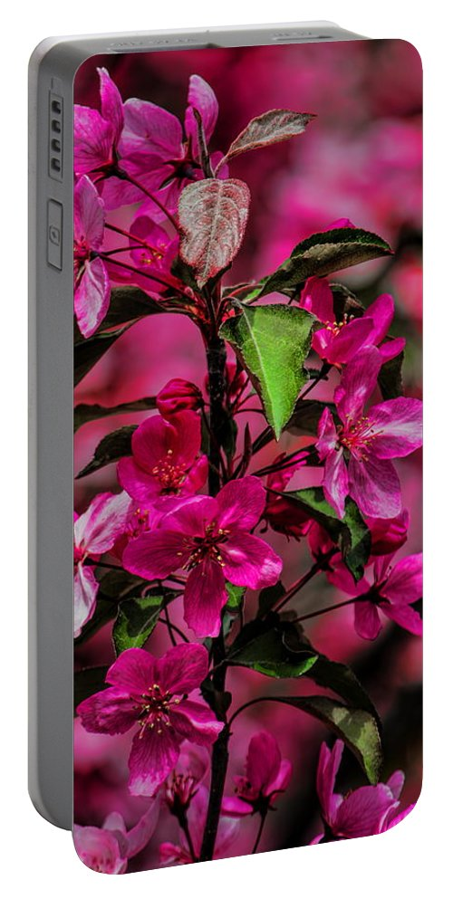 Dale Kauzlaric Portable Battery Charger featuring the photograph Crabapple Tree Blossoms by Dale Kauzlaric
