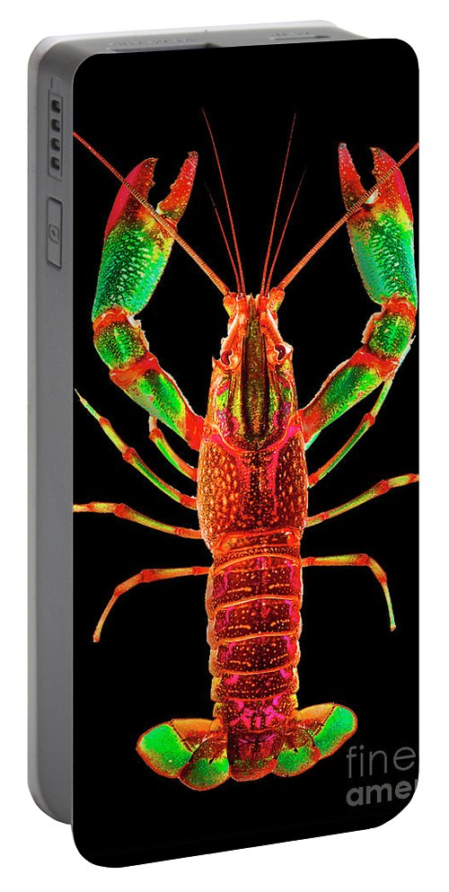 Poster Digital Art Greeting Cards Postcard Paintings Drawings Design Collage Assemblage Vivid Colors Bright Crawfish Langusta Langosta American Lobster Sea Aquarium Aqua Tropical Seafood Portable Battery Charger featuring the mixed media Crawfish In The Dark - Rouillegreen by Baptiste Posters