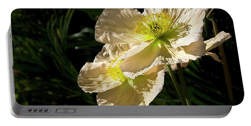 Flower Portable Battery Charger featuring the photograph Creamy Poppies by Phyllis Denton