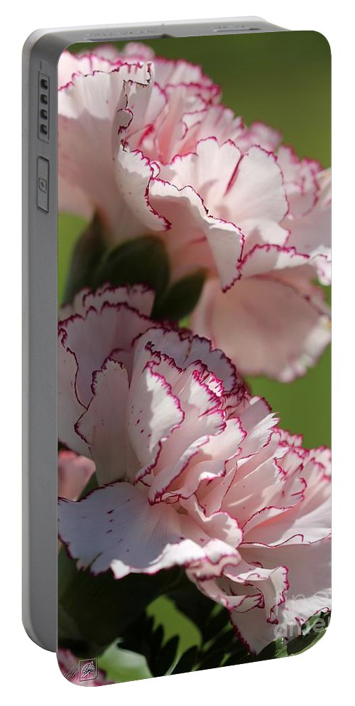 Mccombie Portable Battery Charger featuring the photograph Creamy White With Red Picotee Carnation by J McCombie