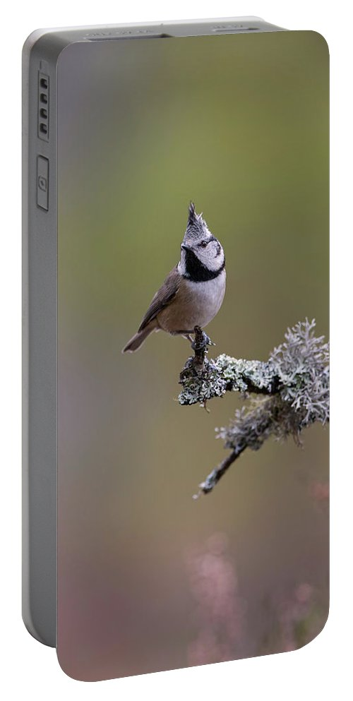 Crested Portable Battery Charger featuring the photograph Crested Tit In Woodland by Peter Walkden