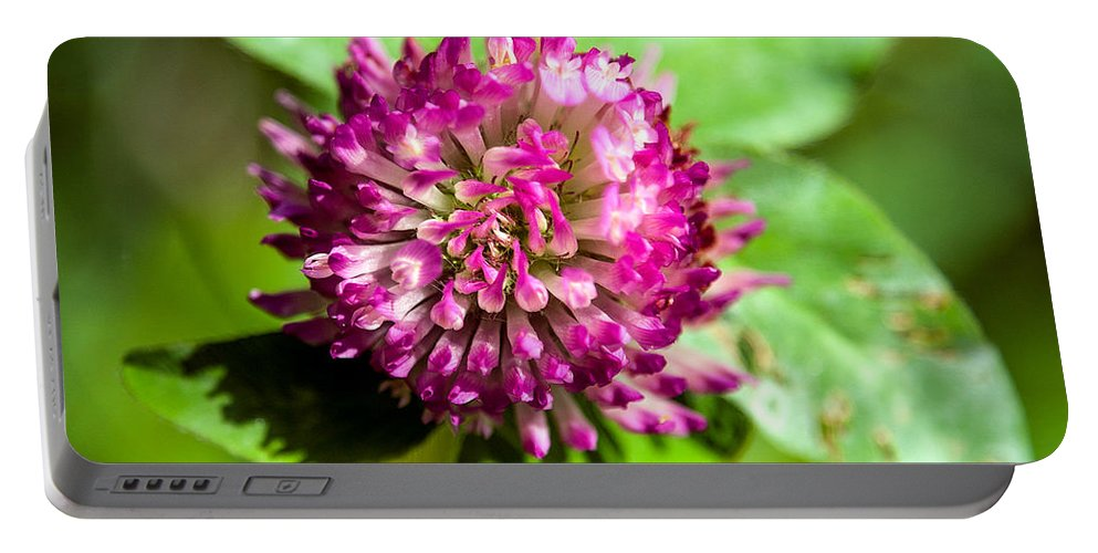 Flower Portable Battery Charger featuring the photograph Crimson And Clover by John Haldane