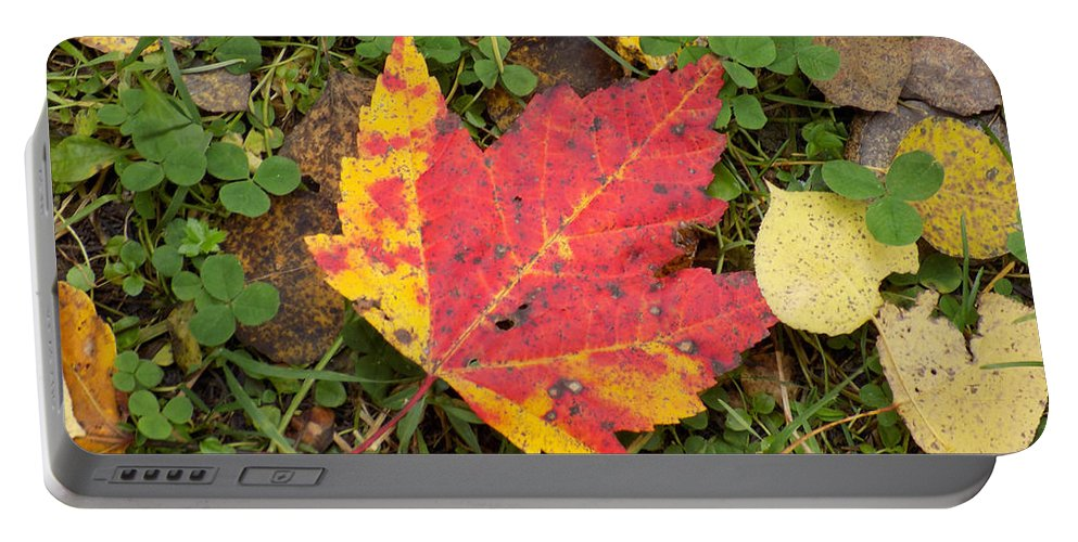 Maple Leaf Portable Battery Charger featuring the photograph Crimson And Clover by William Tasker