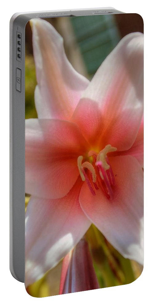Flower Portable Battery Charger featuring the photograph Crinum Lilies by Linda Covino