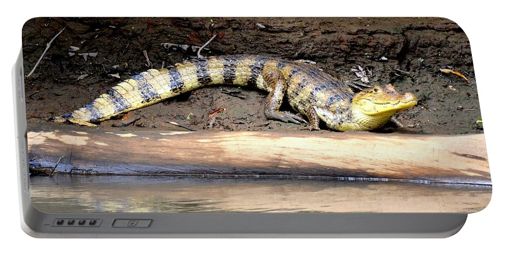 Croc Portable Battery Charger featuring the photograph Croc Time by Debbi Granruth