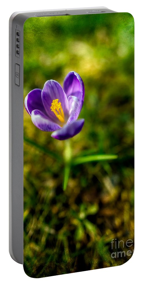 Crocus Portable Battery Charger featuring the photograph Crocus by Adrian Evans