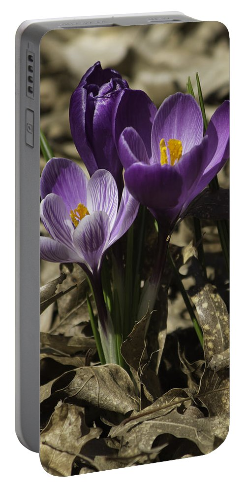 Crocus Portable Battery Charger featuring the photograph Crocus Trio 01 by Teresa Mucha