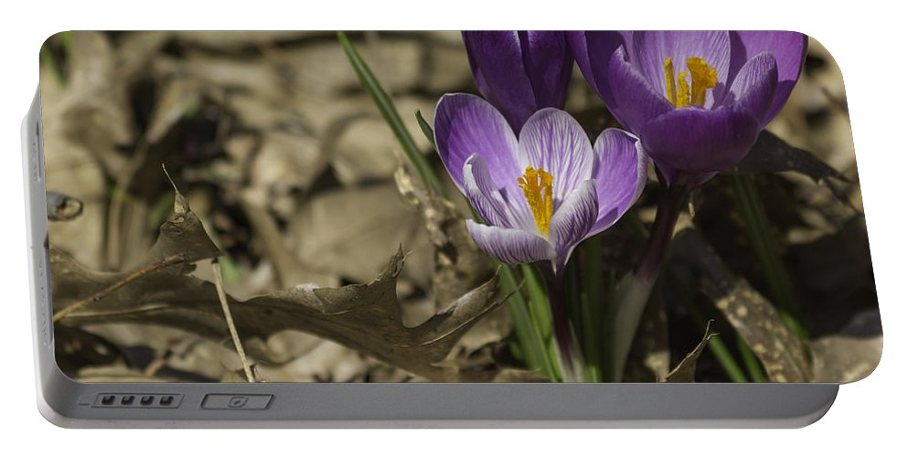 Crocus Portable Battery Charger featuring the photograph Crocus Trio 05 by Teresa Mucha