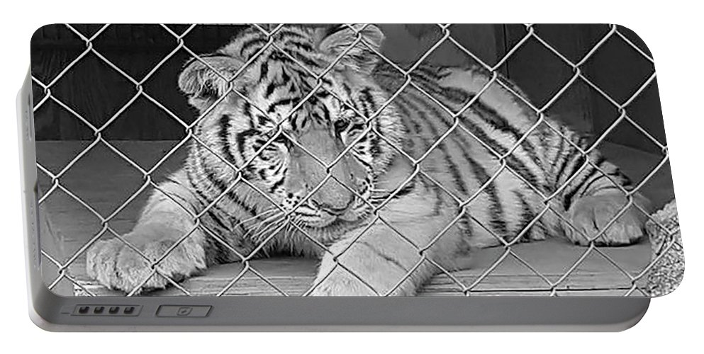 Tiger Portable Battery Charger featuring the photograph Cubs by Scott Davis