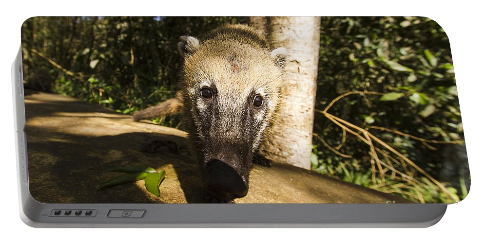 Nature Portable Battery Charger featuring the photograph Curiosity by Mirko Chianucci