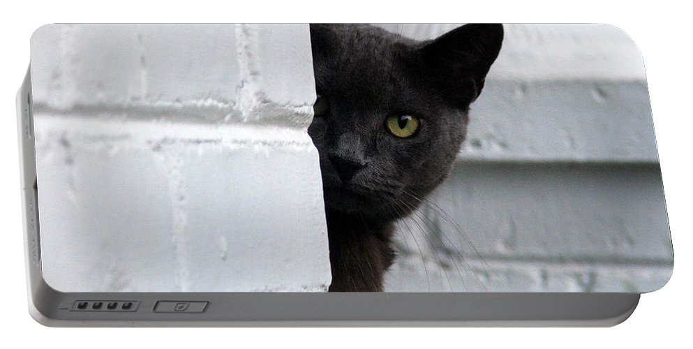 Cats Portable Battery Charger featuring the photograph Curiosity by Robert Meanor