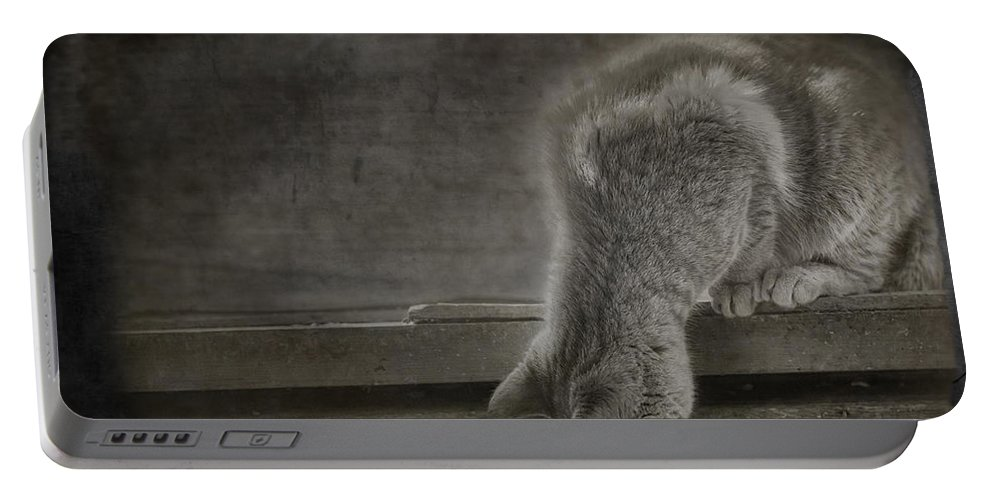 Cat Portable Battery Charger featuring the photograph Curiosity by Susan Capuano