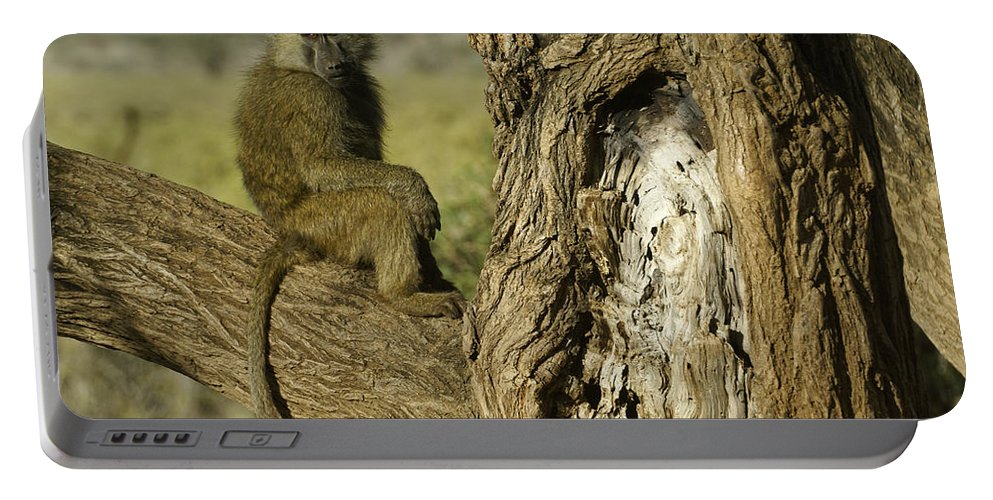 Africa Portable Battery Charger featuring the photograph Curious Baboon by Michele Burgess
