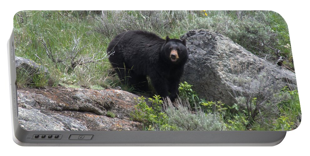 Black Bear Portable Battery Charger featuring the photograph Curious Black Bear by Frank Madia