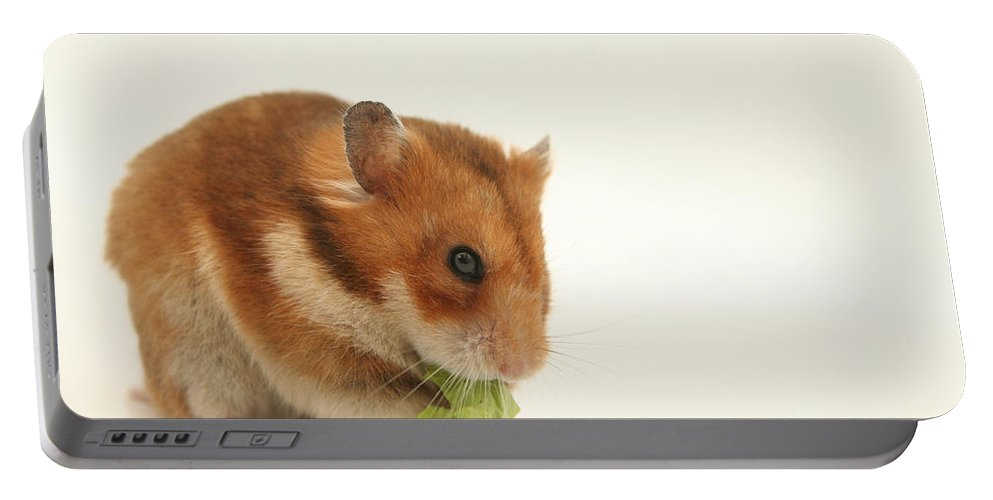 Hamster Portable Battery Charger featuring the photograph Curious Hamster by Yedidya yos mizrachi