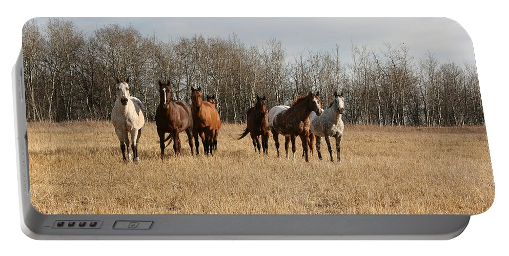 Horses Herd Animals Ranch Cowboy Appaloosa Quarter Horse Mares Pasture Field Grass Portable Battery Charger featuring the photograph Curious Horses by Andrea Lawrence