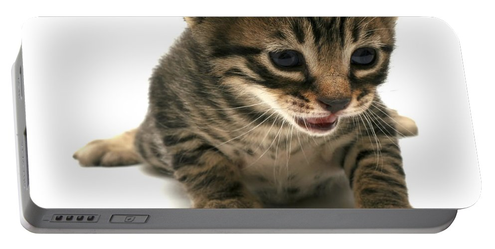 Cat Portable Battery Charger featuring the photograph Curious Kitten by Yedidya yos mizrachi