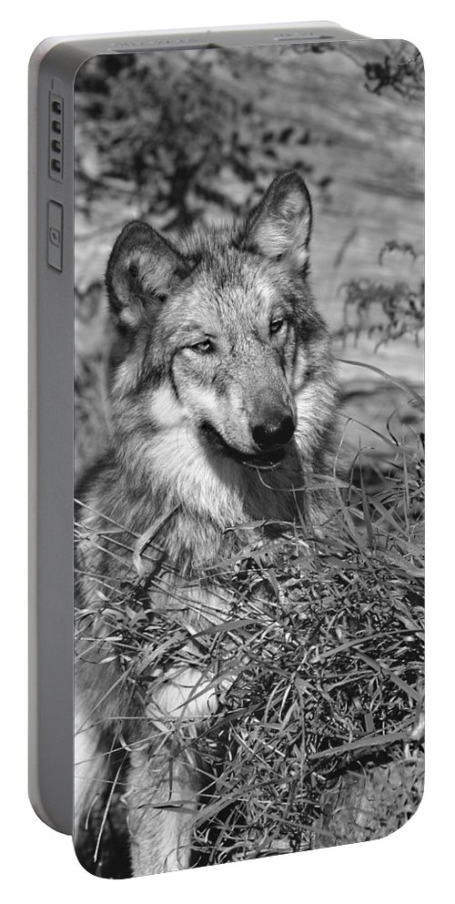 Wolf Pup Portable Battery Charger featuring the photograph Curious Wolf Pup by Shari Jardina