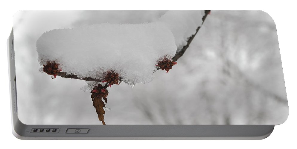 White Portable Battery Charger featuring the photograph Curtailed Bloom by Daniel Kelly