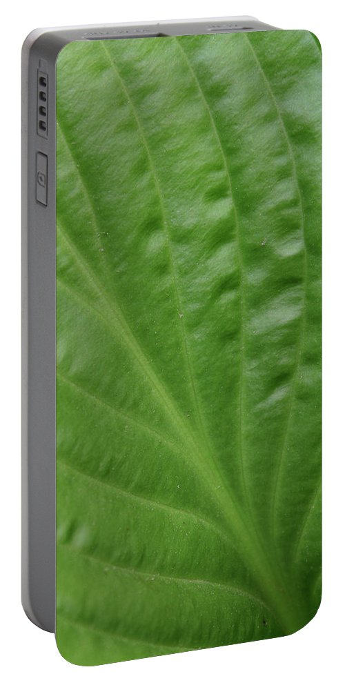 Abstract Portable Battery Charger featuring the photograph Curvy Leaf Lines by Karol Livote