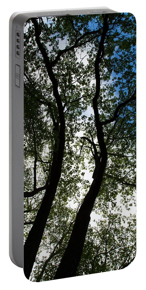 Curvy Trees Portable Battery Charger featuring the photograph Curvy Trees by Karol Livote