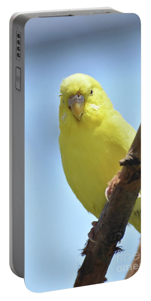 Budgie Portable Battery Charger featuring the photograph Cute Little Yellow Budgie Bird In Nature by DejaVu Designs
