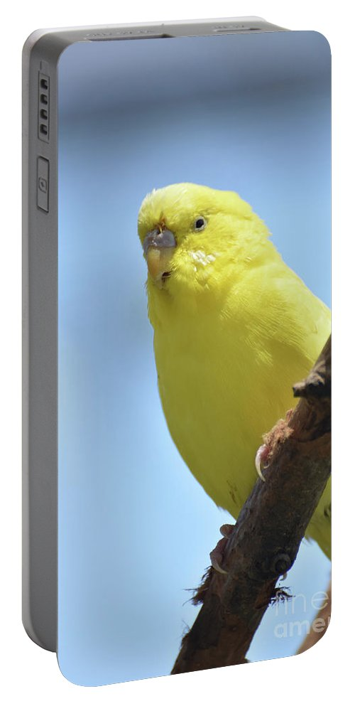 Budgie Portable Battery Charger featuring the photograph Cute Little Yellow Parakeet In The Rainforest by DejaVu Designs