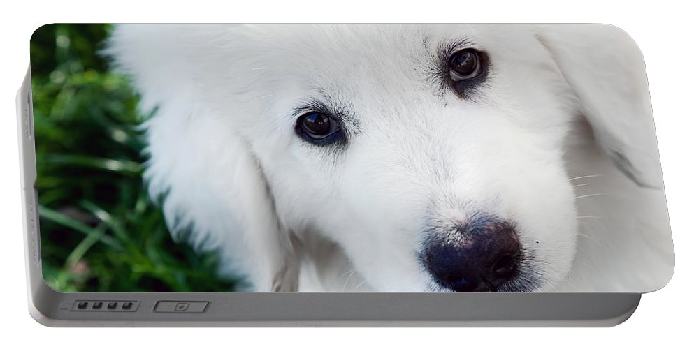 Puppy Portable Battery Charger featuring the photograph Cute White Puppy Dog Portrait. Polish Tatra Sheepdog by Michal Bednarek