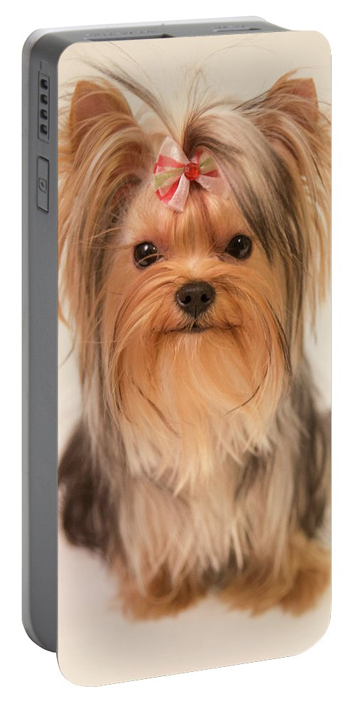 Cute Yorkie Portable Battery Charger featuring the photograph Cute Yorkie by Yana Reint