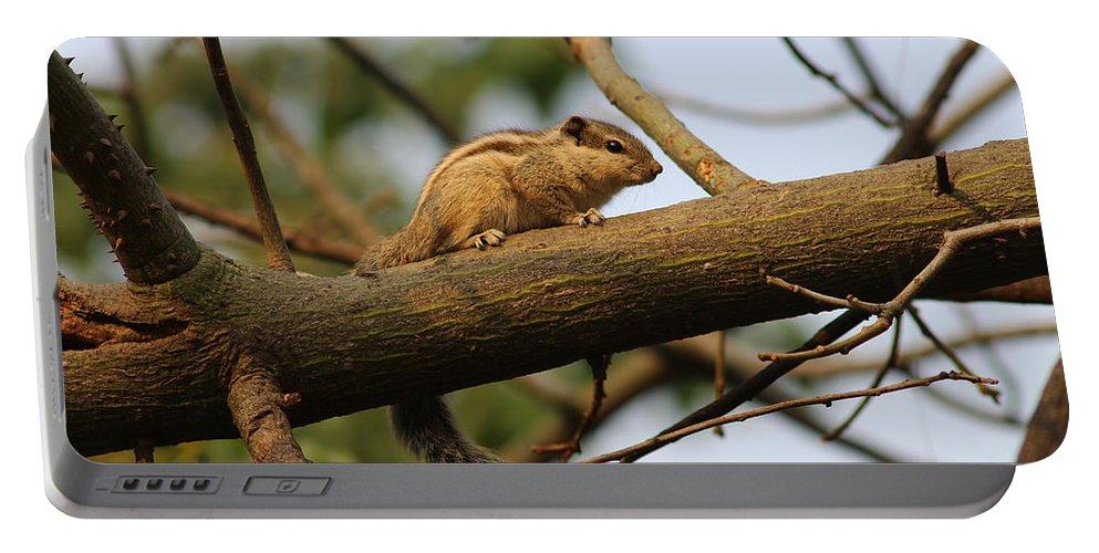 Squirrel Portable Battery Charger featuring the photograph Cuteness by Vikram Kumar