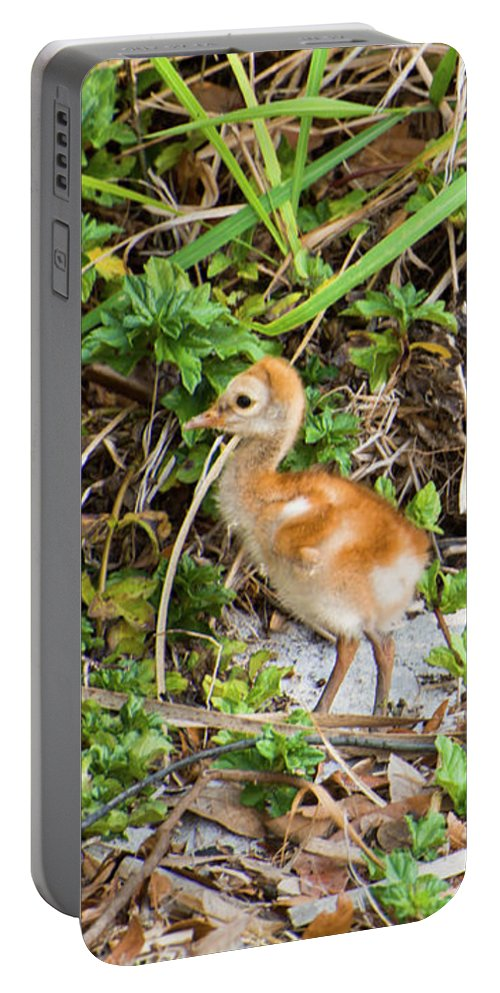 Nature Portable Battery Charger featuring the photograph Cutie-beauty by Zina Stromberg