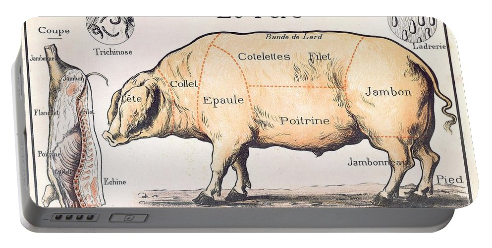 Eating;farm Animals; Cross Section; Loin; Rump; Flank; Butcher; Joint; Pig; Pigs; Shoulder; Ham; Belly; Shoulder; Diagram; Slaughter; Farming; Food Preparation; Domestic Science; Nutrition;teaching;education;home Economics; Farming; Breed;butchering Portable Battery Charger featuring the drawing Cuts Of Pork by French School