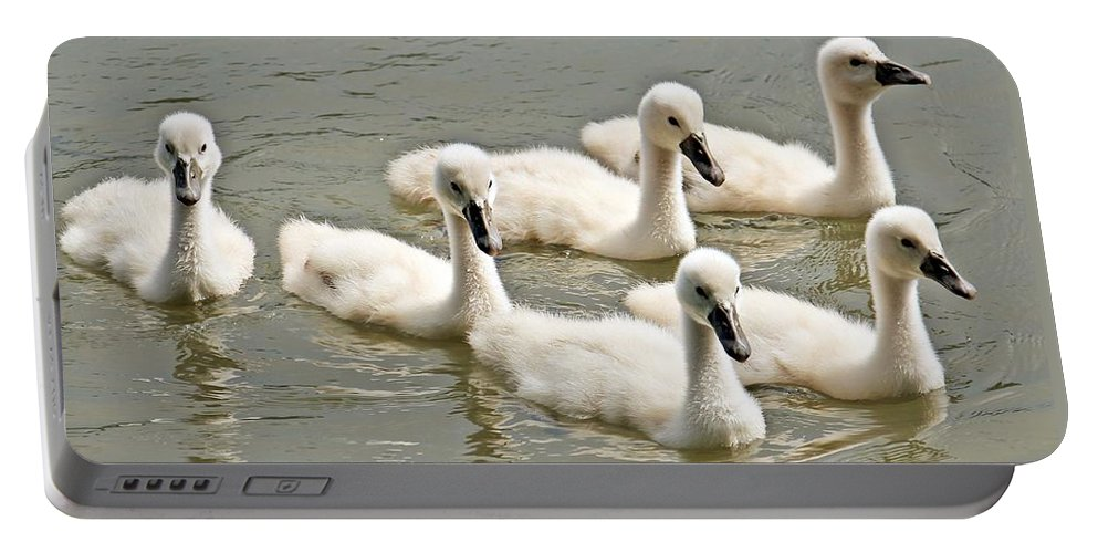 Swan Portable Battery Charger featuring the photograph Cygnets by FL collection