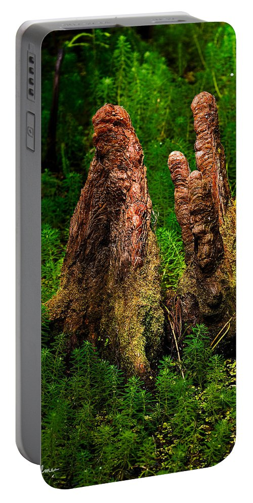 Christopher Holmes Photography Portable Battery Charger featuring the photograph Cypress Knees by Christopher Holmes