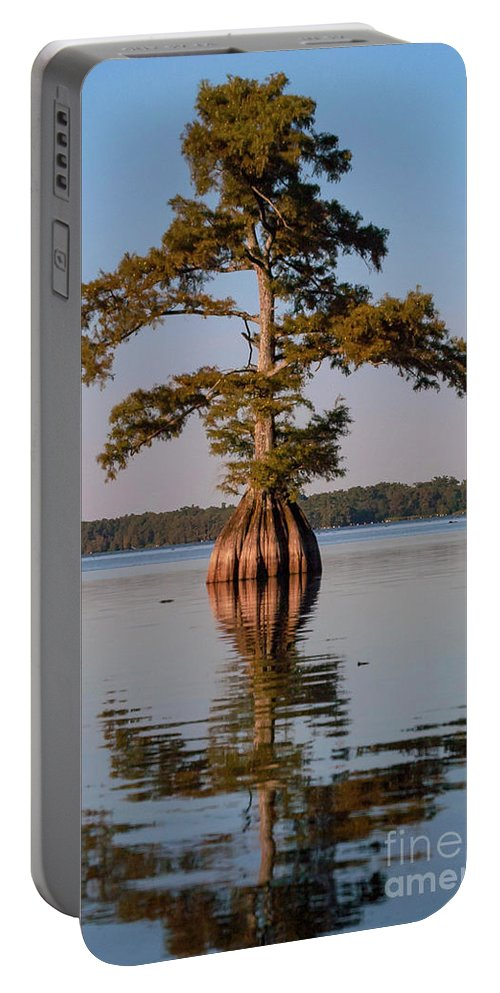 Reelfoot Lake State Park Portable Battery Charger featuring the photograph Cypress Tree On Reelfoot Lake by Bob Phillips