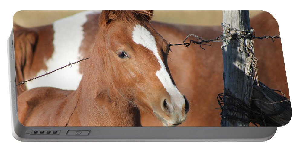 Colt Portable Battery Charger featuring the photograph Daddys Home by Pamela Walrath