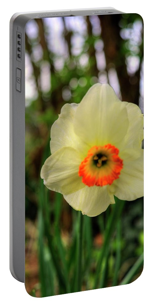Royal Portable Battery Charger featuring the photograph Daffadlil Flower by FineArtRoyal Joshua Mimbs