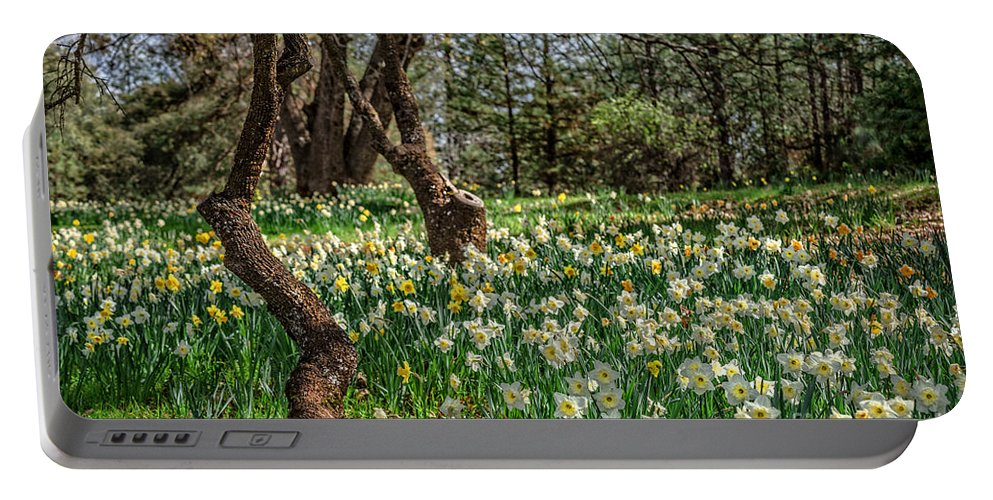 Daffodil Portable Battery Charger featuring the photograph Daffodil Hill Gardens by Dianne Phelps