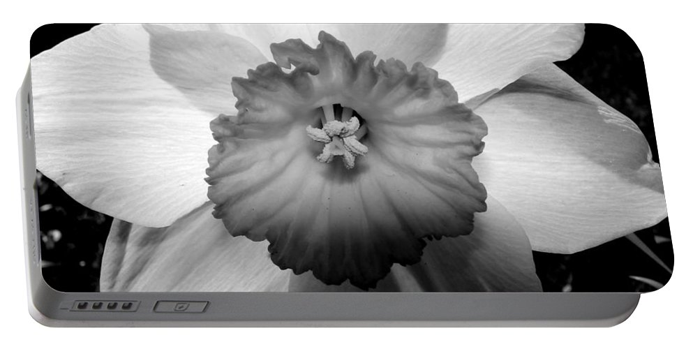 Daffodil Portable Battery Charger featuring the photograph Daffodil In Springtime by Michelle Calkins