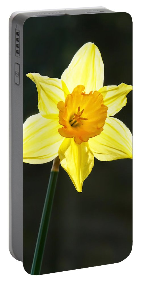 Daffodil Portable Battery Charger featuring the photograph Daffodil by Susie Peek