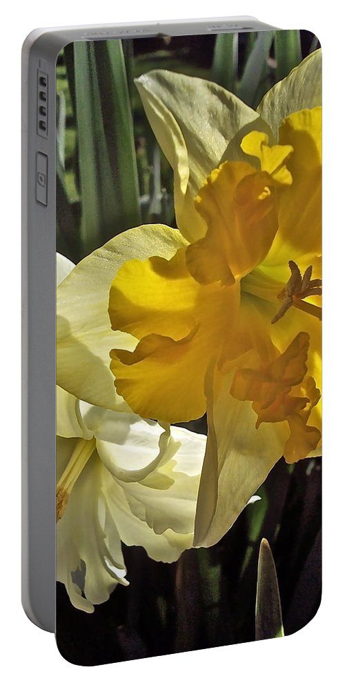 Flowers Portable Battery Charger featuring the photograph Daffodils 4 by Pamela Cooper
