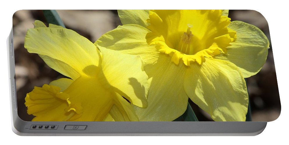 Nature Portable Battery Charger featuring the photograph Daffodils In Spring by Sheila Brown