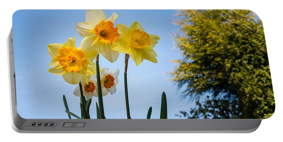 Backlit Portable Battery Charger featuring the photograph Daffodils In The Sky by David Head