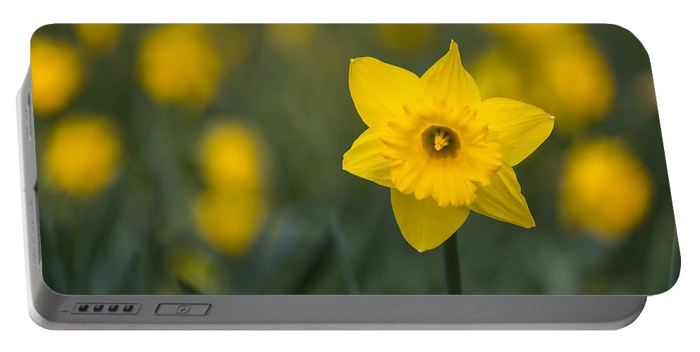 Floral Portable Battery Charger featuring the photograph Daffodils by Matt Malloy