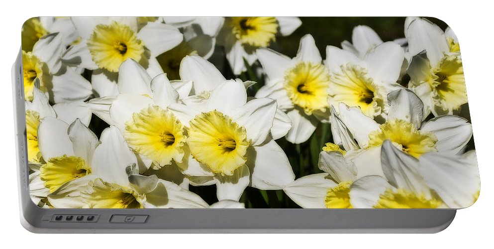 Flowers Portable Battery Charger featuring the photograph Daffodils by Svetlana Sewell